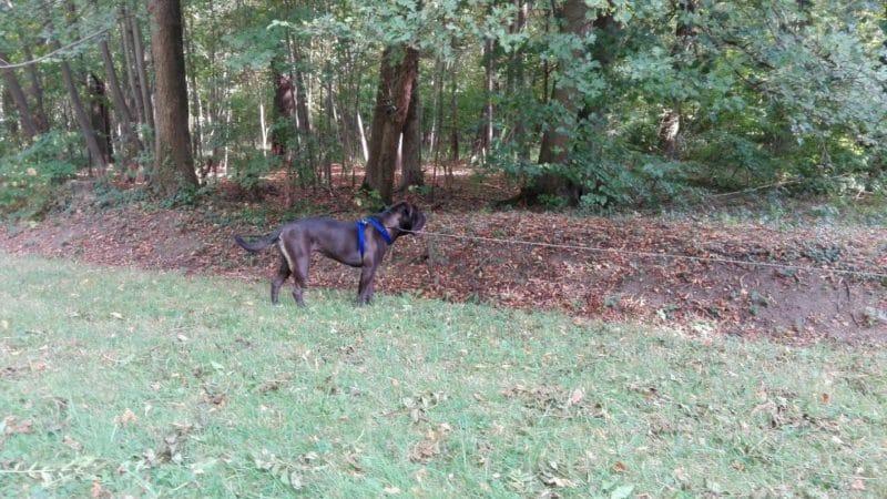 Ausflug mit Hund nach Laxenburg, Niederösterreich