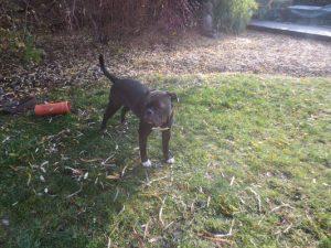 Mit Hund im Garten – Unser Frühlingsputz