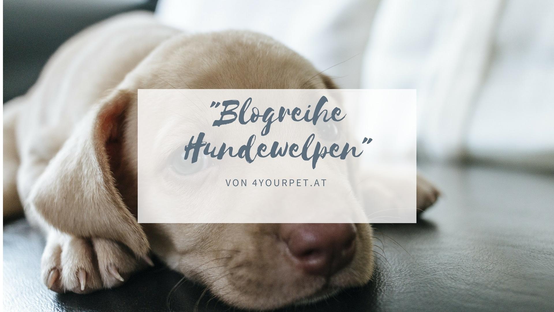 Blogreihe – Alles über Hundewelpen