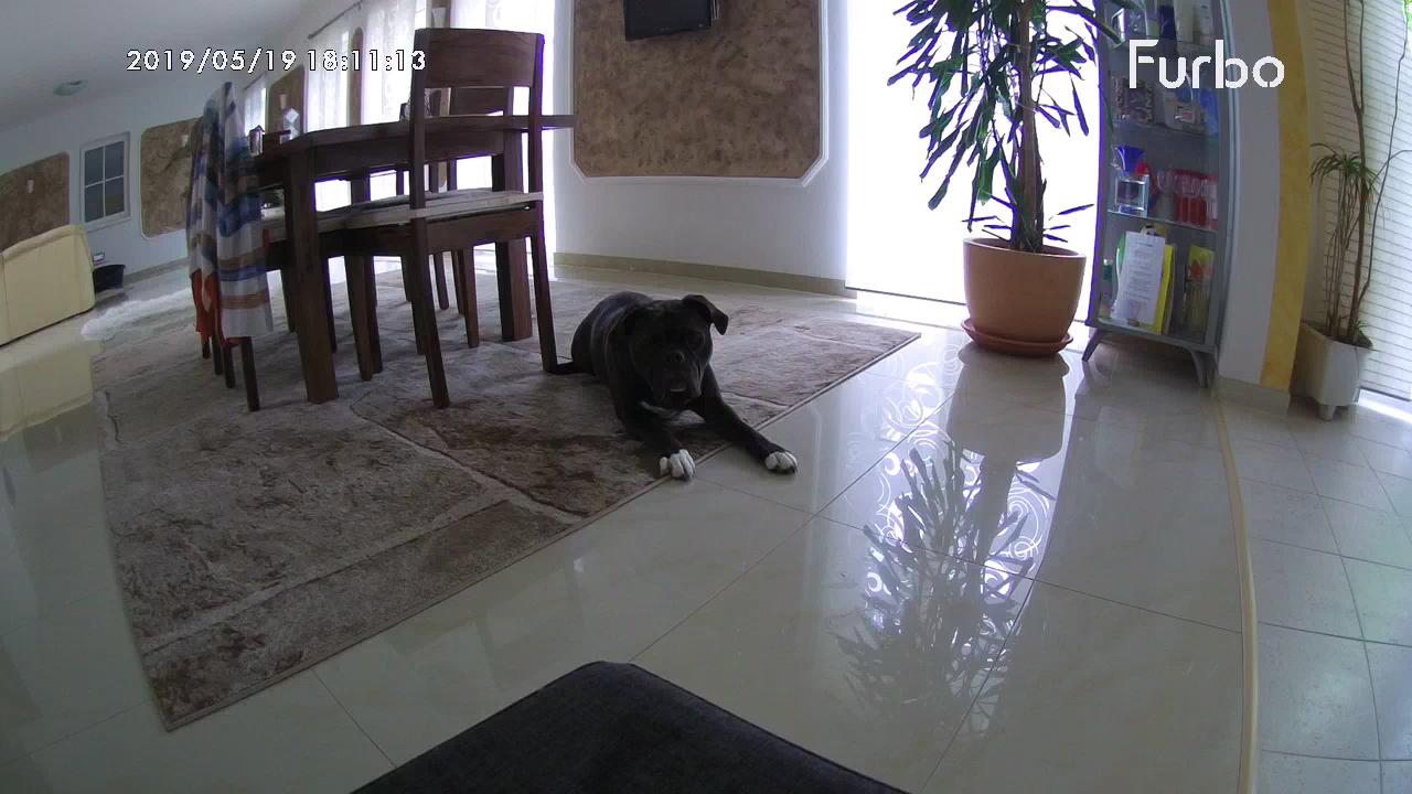 Hundekamera