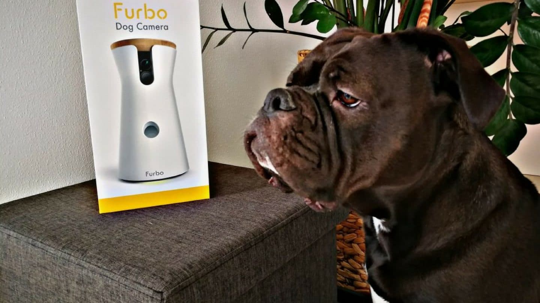 Entdecke mit FURBO, was Dein Hund macht, wenn Du mal nicht zuhause bist