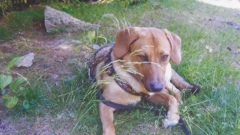 Stress beim Hund und seine Auswirkungen
