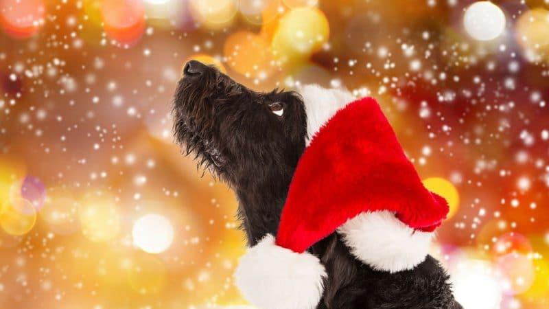 Gesunde Hundeleckerlis zur Weihnachtszeit