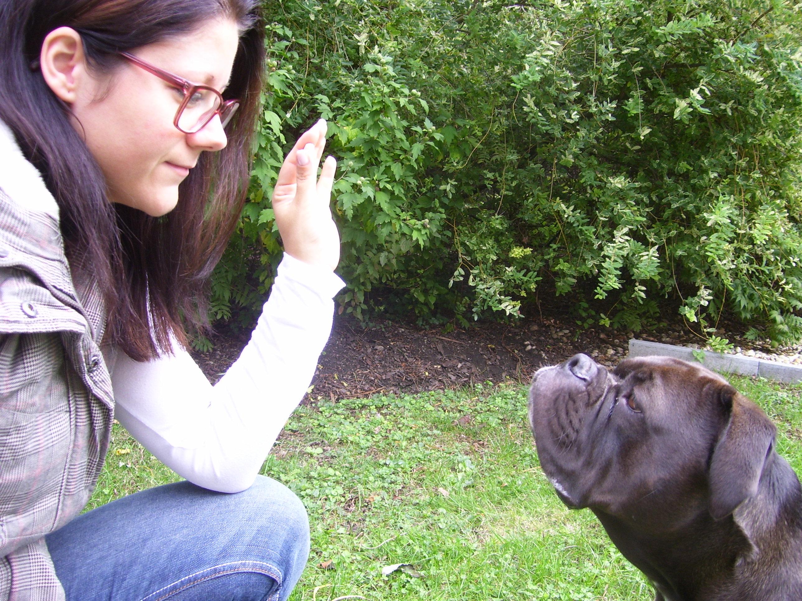 So lernt dein Hund die SCHAU Übung