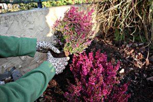 Meine persönlichen Tipps für die Gartenpflege