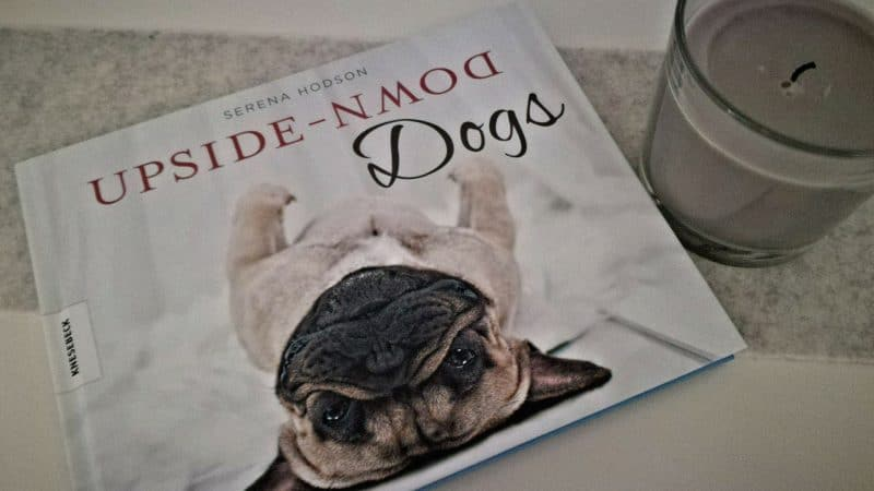 Upside Down – DOGS von Serena Hodson