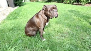 Auch Hunde haben Sodbrennen – Übersäuerung ist keine Seltenheit