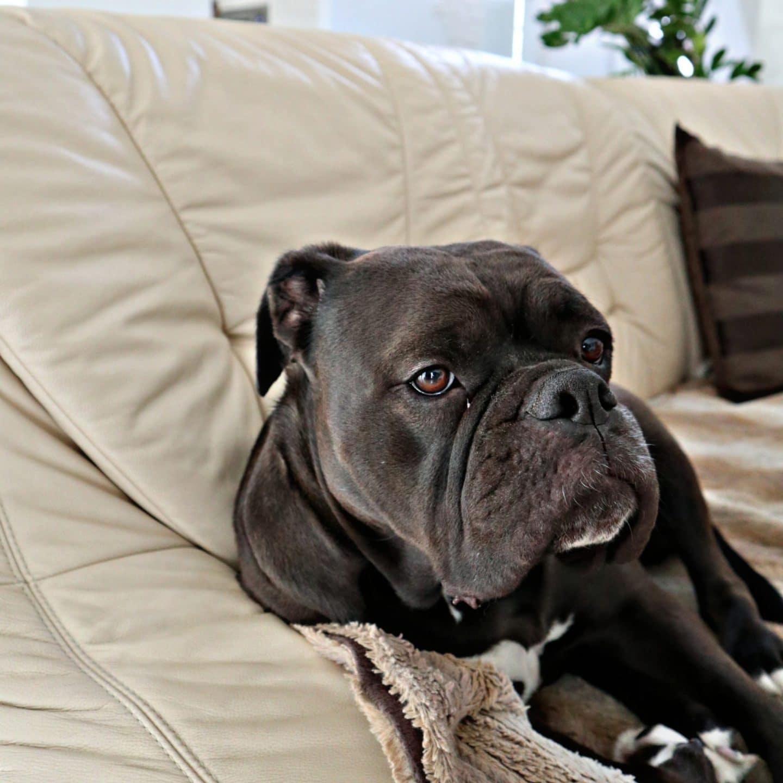 Hunde-Filme für Hundeliebhaber und welche die es werden wollen