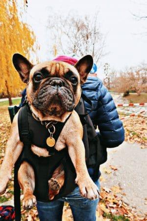 DogCarrier – ein Hunderucksack auf Reisen